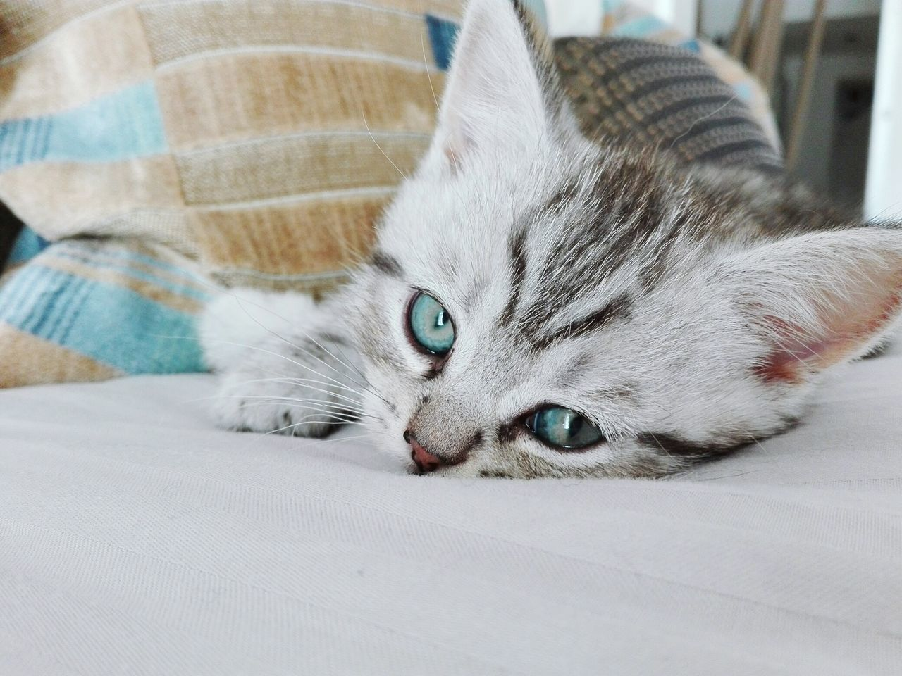 Bellissimo :-) EyeEm Eyem Gallery Eyeem Photography Eyeem Market Puppy Power Animals Kitten Adorable Kittensofinstagram Sweet♡ Lovely Puppy Love ❤ Kitten Love Kitten 🐱 Cats 🐱 Showcase July