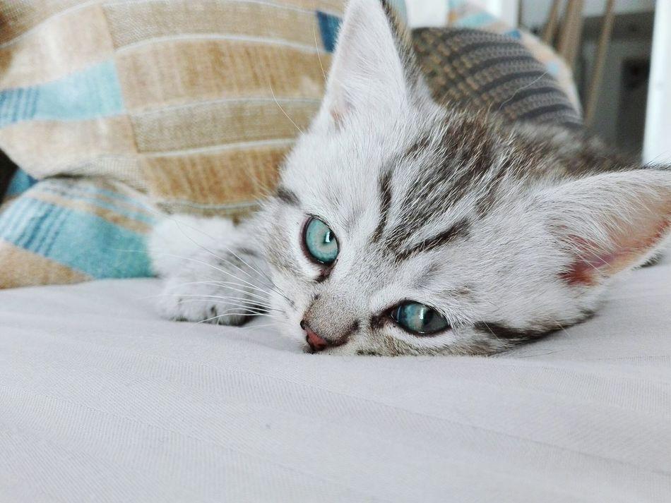 Bellissimo :-) EyeEm Eyem Gallery Eyeem Photography Eyeem Market Puppy Power Animals Kitten Adorable Kittensofinstagram Sweet♡ Lovely Puppy Love ❤ Kitten Love Kitten 🐱 Cats 🐱 Showcase July