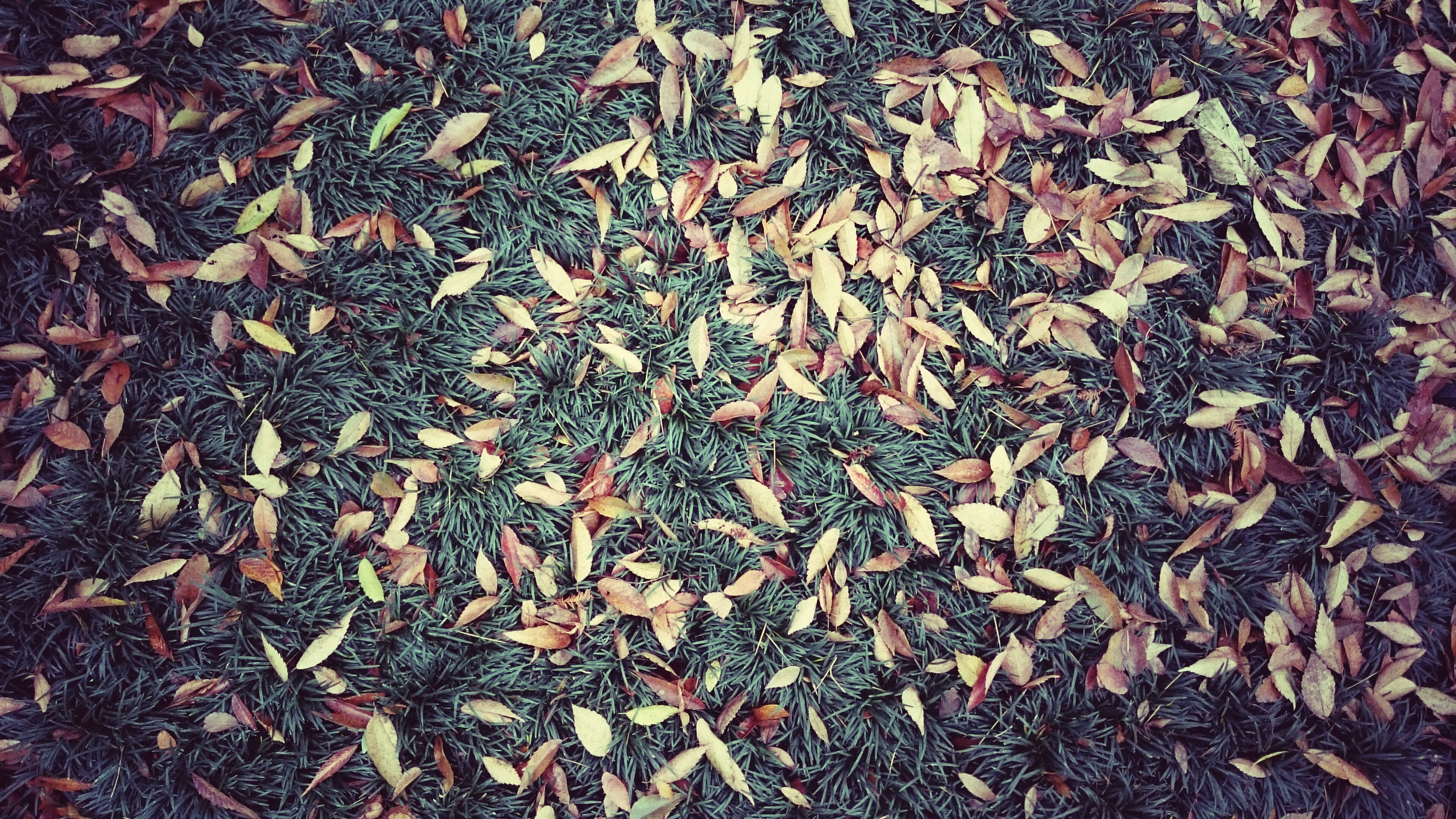 full frame, backgrounds, high angle view, abundance, leaf, dry, textured, field, nature, autumn, day, pattern, outdoors, change, no people, natural pattern, leaves, ground, fallen, close-up