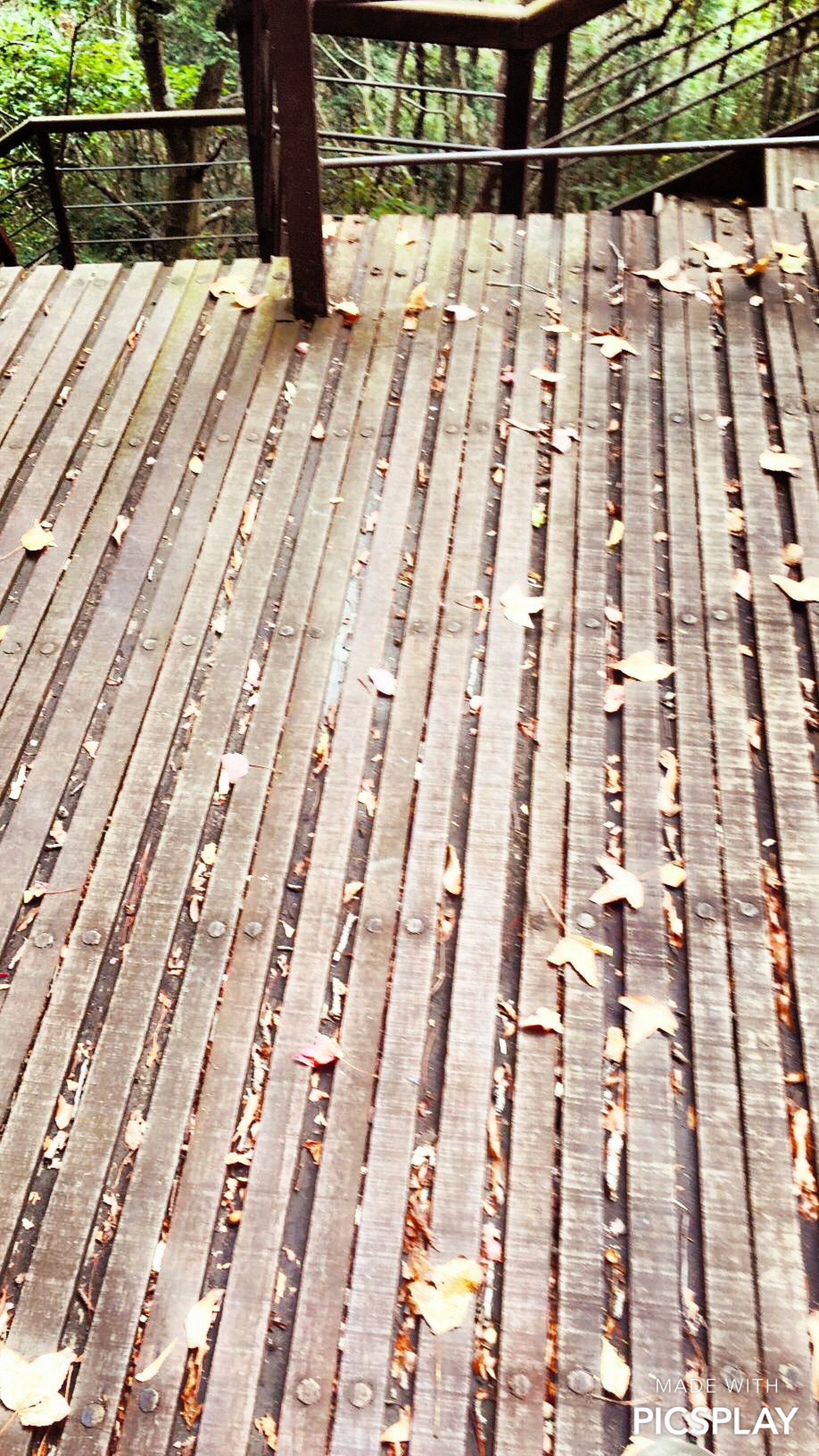 wood - material, wooden, wood, bench, tree, tree trunk, close-up, plank, day, outdoors, old, no people, fence, high angle view, sunlight, park - man made space, metal, pattern, forest, textured