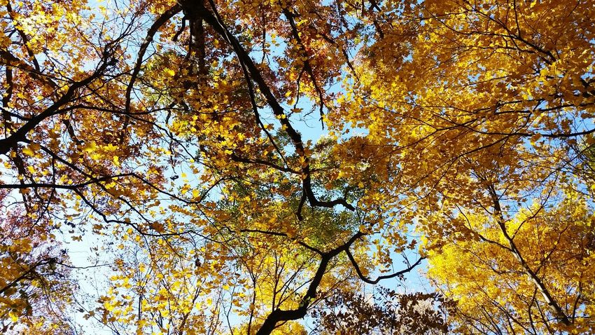 This is a photo I took of the top of some trees in the fall... i love it to be honest