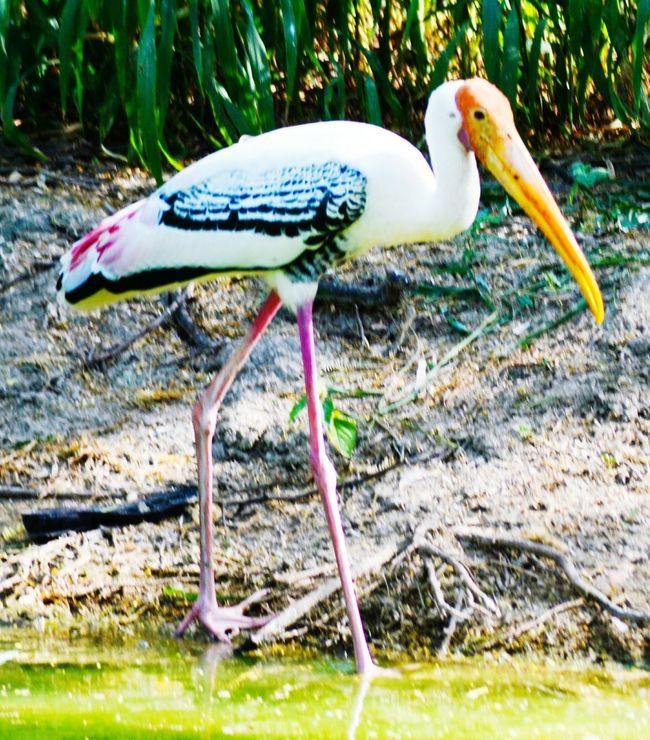 Animal Wildlife Stork Perching White Stork Animals In The Wild
