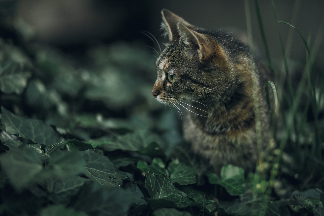 Lazy Sunday in Mielec, Poland. Animal Themes Close-up Day Domestic Animals Domestic Cat Feline Mammal Nature No People One Animal Outdoors Pets Sitting Whisker