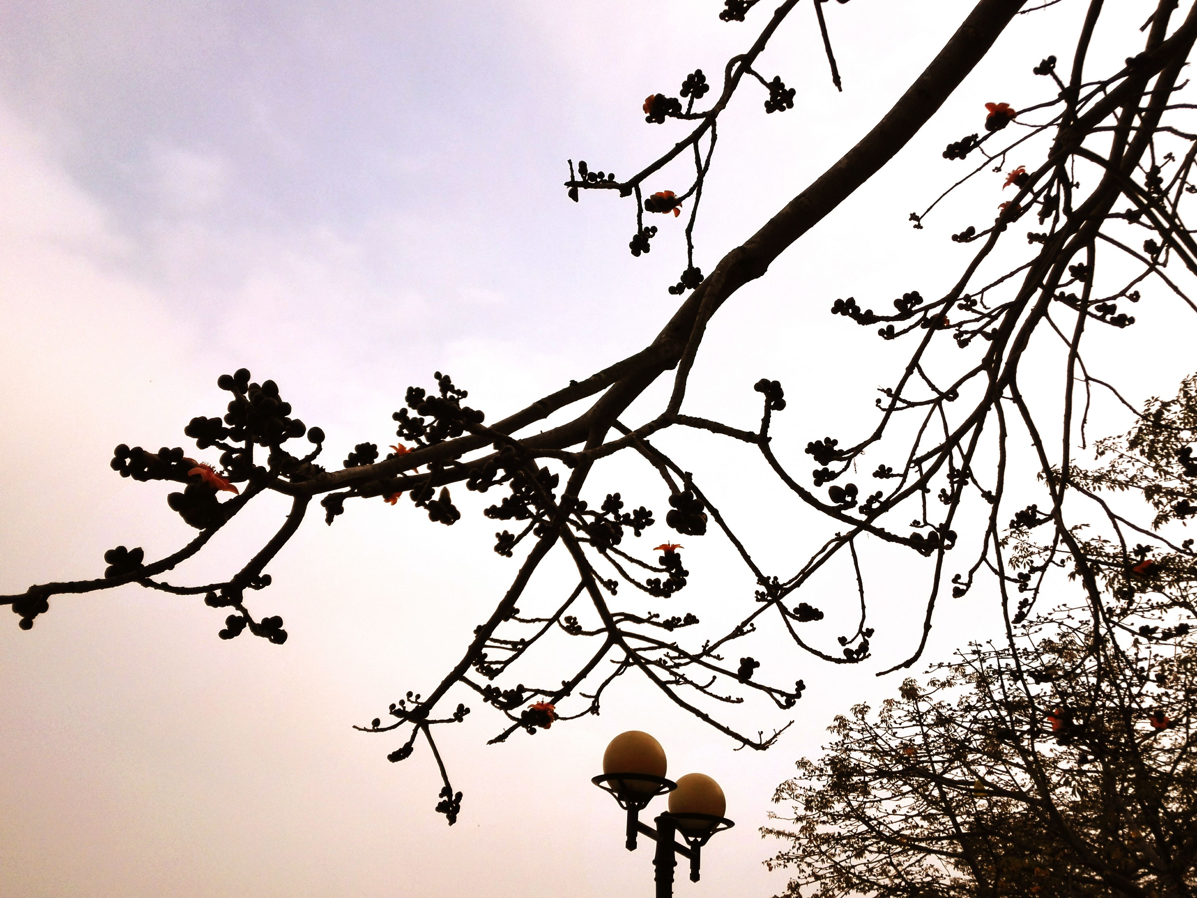 low angle view, branch, tree, growth, sky, silhouette, clear sky, nature, beauty in nature, flower, twig, freshness, outdoors, leaf, high section, bare tree, no people, day, tranquility, blue
