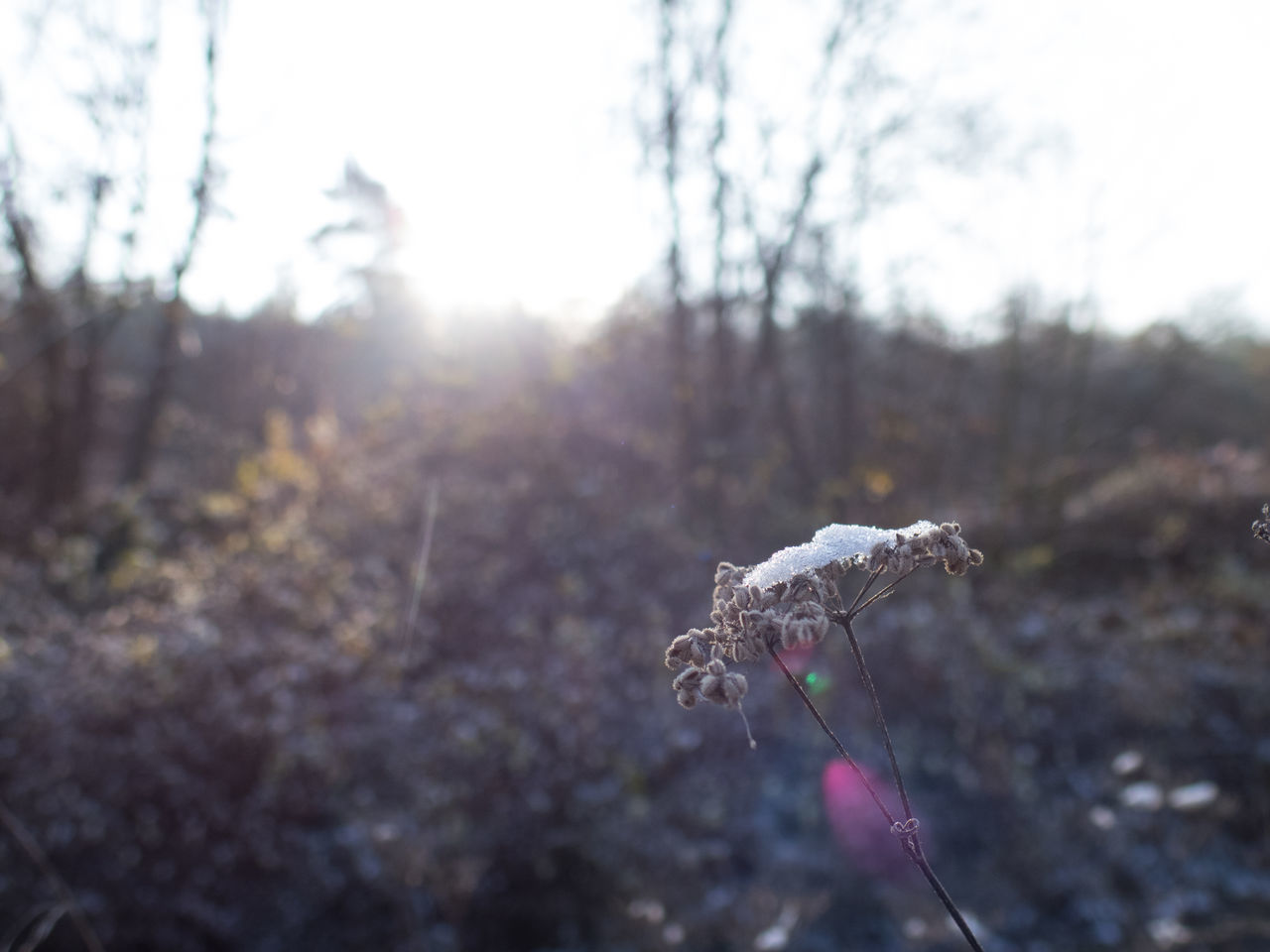 Backgrounds Close Up Close-up Detail Frost Frosty Mornings Glare Ice Crystals Plant Plant Life Winter Winter Wonderland