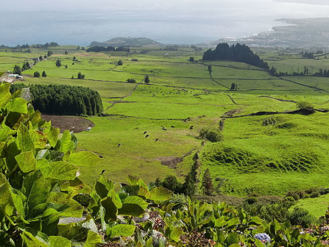 Agriculture Azores Day Green Color Island Landscape Mountain Nature No People Outdoors