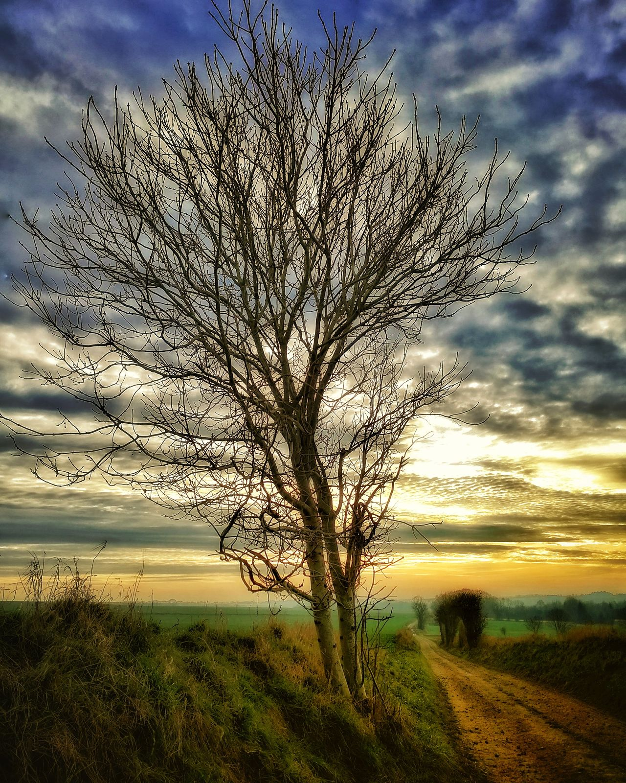 Paysage. Landscape Countryside Tree Serenity Country Life Outdoors Landscape_Collection Road Chemin Nature Tranquility No People