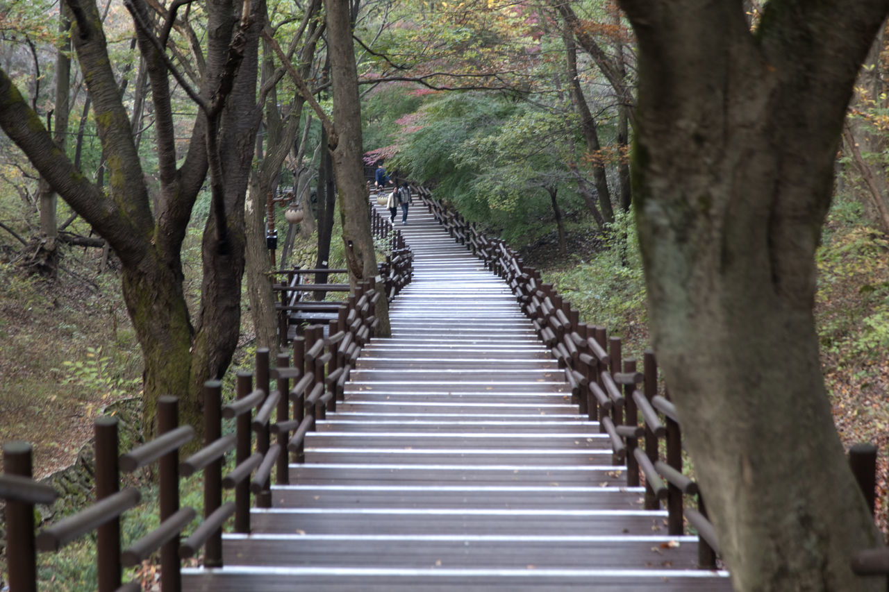 autumn in Maisan Mountain, Muan, Jeonbuk, South Korea Autumn🍁🍁🍁 Beauty In Nature Day Fall Forest Forest Photography Maisan Mountain Nature No People Outdoors Stairway The Way Forward Tranquil Scene Tranquility Tranquility Tree Tree Trunk