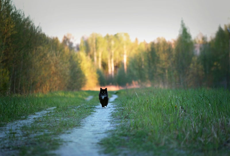 Animal Themes Day Dog Domestic Animals Field Grass Mammal Nature No People One Animal Outdoors Pets Retriever Sunset Tree