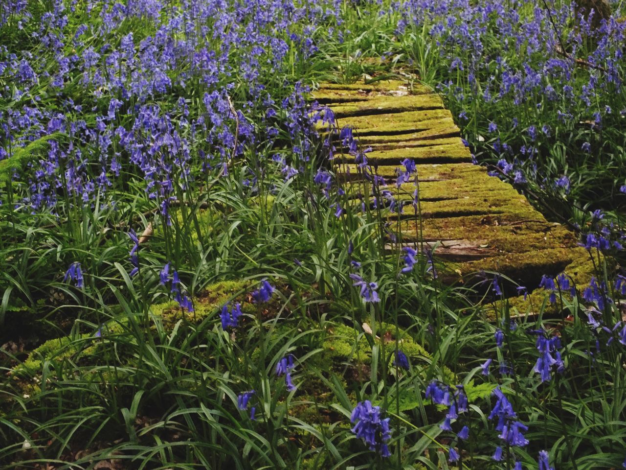 The woodland WoodLand Bluebells Enjoying Life Taking Photos Out For A Walk Flowers Landscape_photography The Great Outdoors - 2016 EyeEm Awards