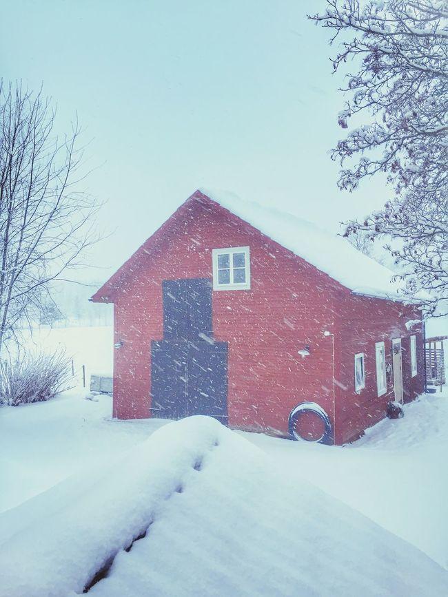 Hello from a snowy kingdom ❄️❤️❄️ The Kingdom Of Red Barns Showcase: January EyeEm Nature Lover Tadaa Community EyeEm Best Shots Vackra Dalarna It's Cold Outside