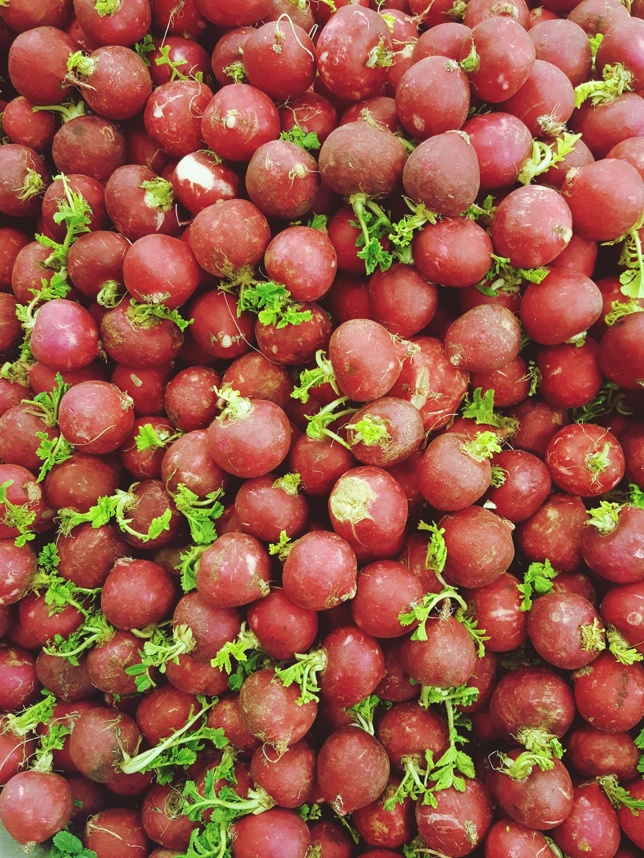 Freshness Food Red Food And Drink Nature Market No People Full Frame Radish