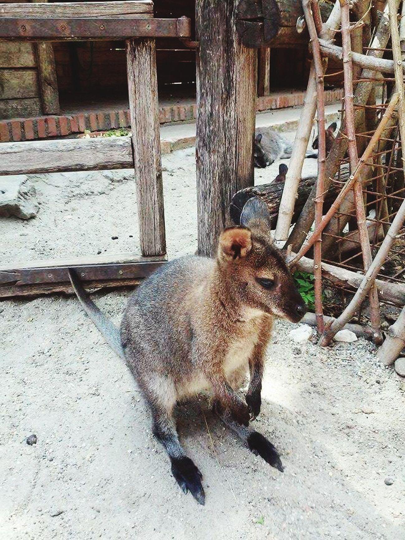 Kangoo Beautiful ♥ Horny ☜ Cheese! Beautiful Day Taking Photos