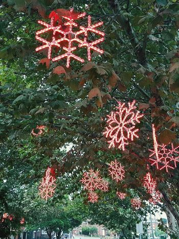 Red No People Text Outdoors Day Snowflakes Snow Summer Snow Kingsford Sydney, Australia