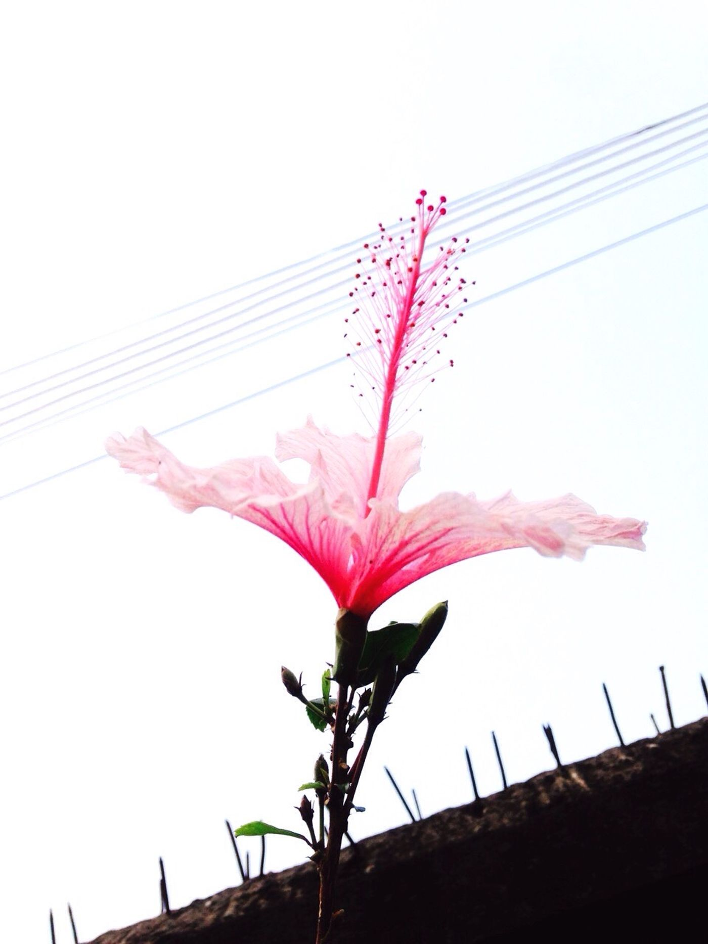Natural new year💕 The Action Photographer - 2015 EyeEm Awards