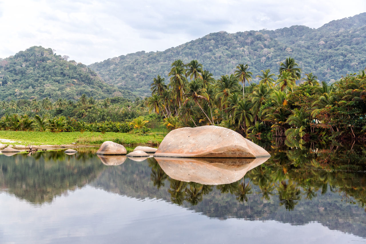 Lake in Tayrona National Park near Santa Marta, Colombia reflecting a large rock and palm trees Beach Beautiful Caribbean Coast Colombia Day Forest Idyllic Landscape National Park Nature Palm Rock Sand Santa Marta Santa Marta, Colombia Scenic Sea South America Tayrona Tourism Travel Tree Tropical Water