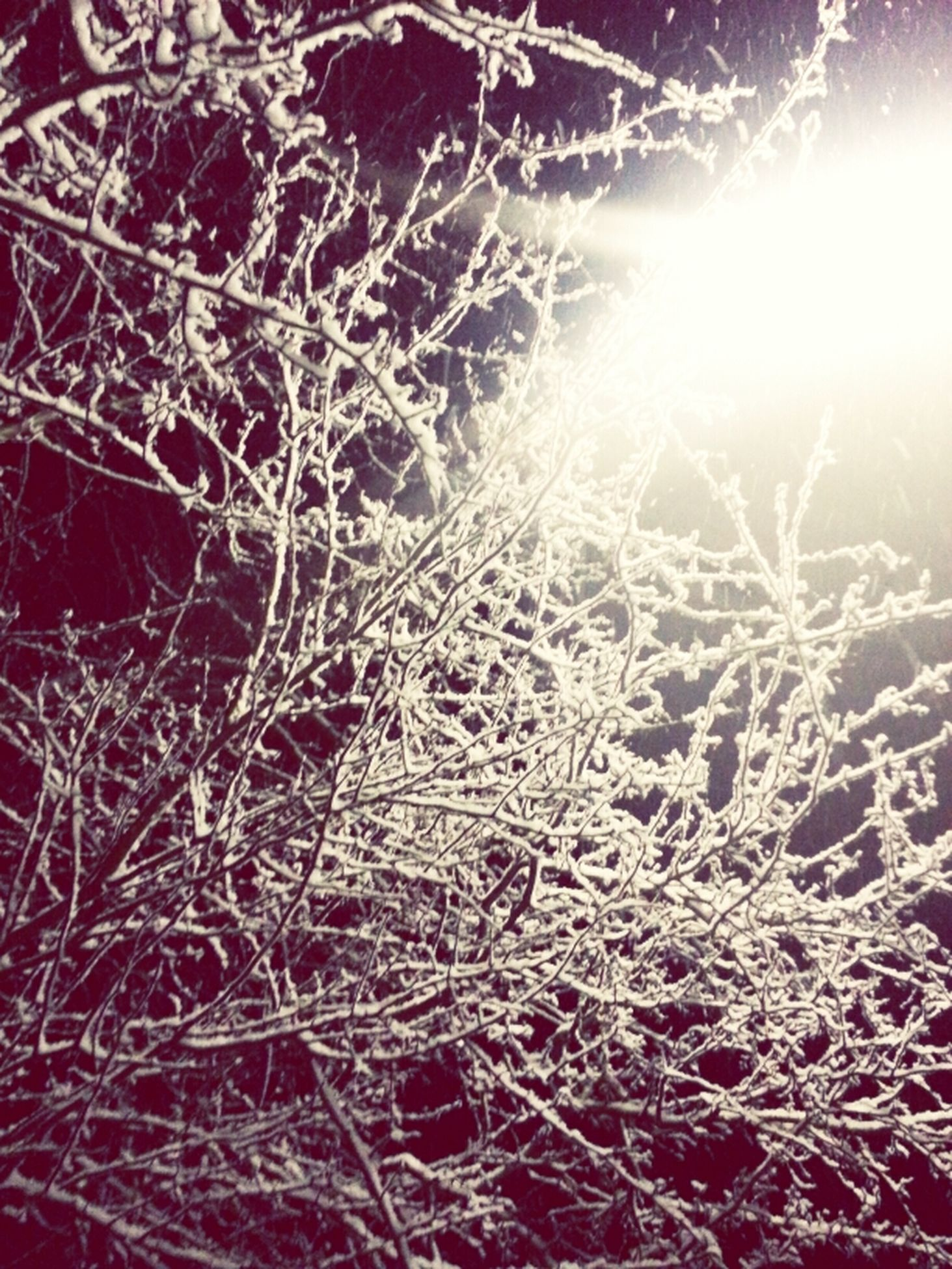 branch, nature, bare tree, tranquility, sunlight, beauty in nature, winter, cold temperature, low angle view, outdoors, no people, close-up, night, tree, scenics, backgrounds, sun, snow, growth