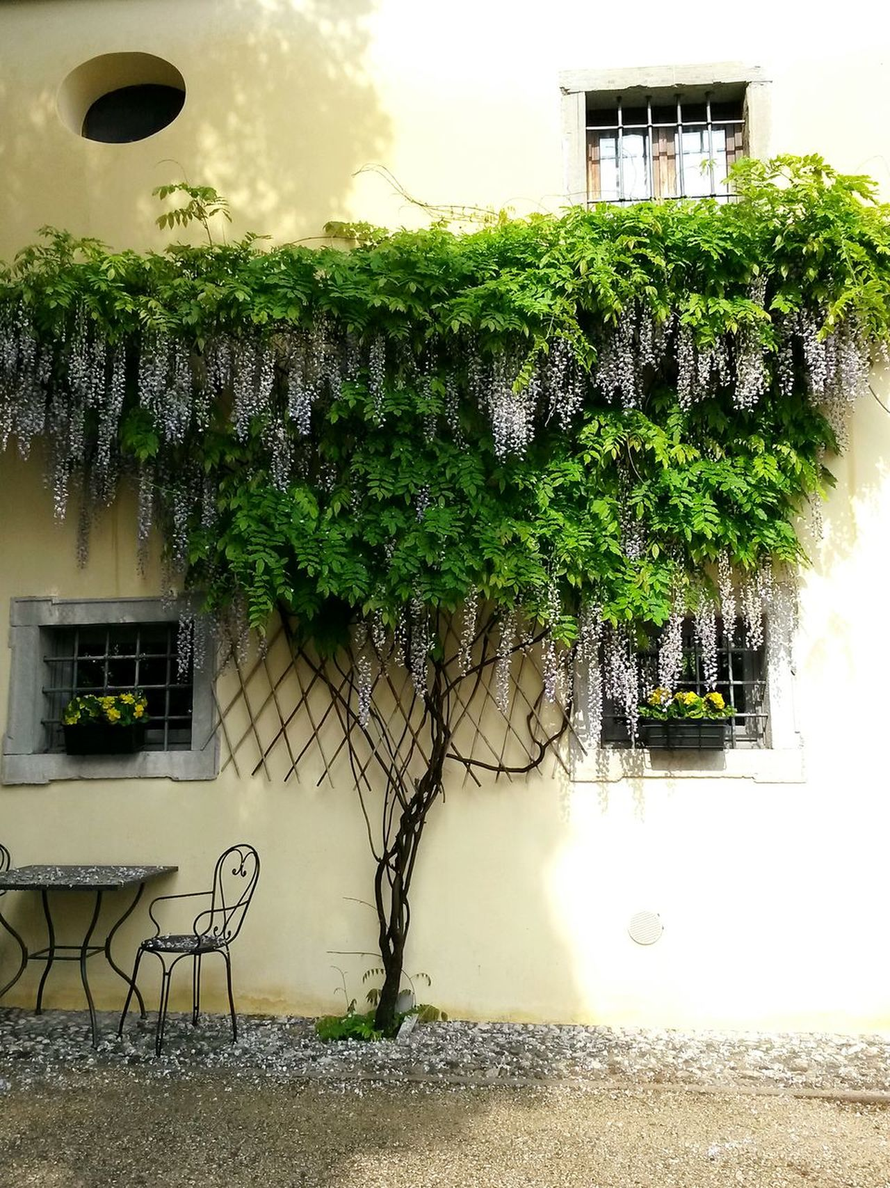 Outdoors Tree Building Exterior Glicineinfiore Glicine Locanda No People Chairs And A Table Wine Bar Castle Outdoors Day Blossoming Tree Plant