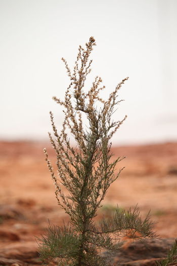 EyeEm Selects Nature Plant Outdoors Beauty In Nature Day Arid Climate Landscape No People Water Tree Freshness Close-up