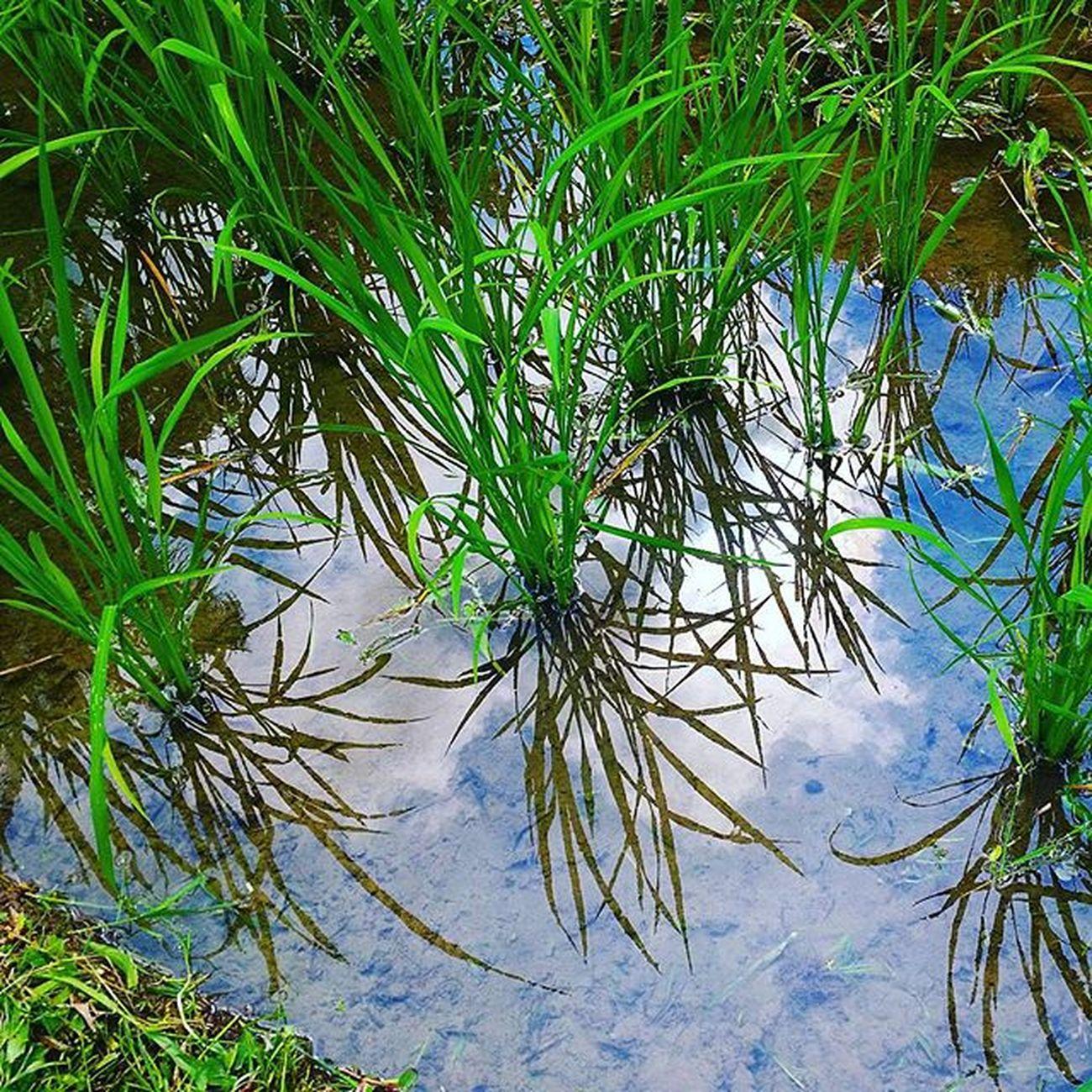 Naturelovers Nothingisordinary Nature Ig_nature Ig_naturelovers Naturaleza Nature_perfection Natural Nature_perfection Natureza Ig_naturaleza Ig_artistry Bestoftheday Best  Bali Ig_ubudbali