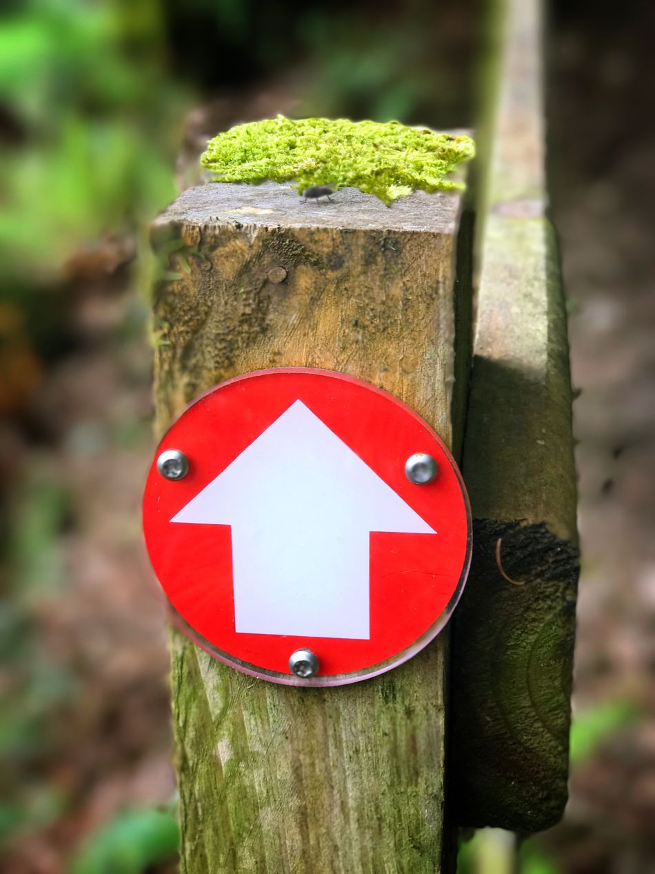 Red Focus On Foreground Day Outdoors No People Close-up Wood - Material Tree Trunk Tree Nature Arrow Arrow Symbol Walk Walk In The Forest Forest Nature Hike Hiking Trail Hiking Trail Outdoors Leisure Great Outdoors Directional Sign Safety