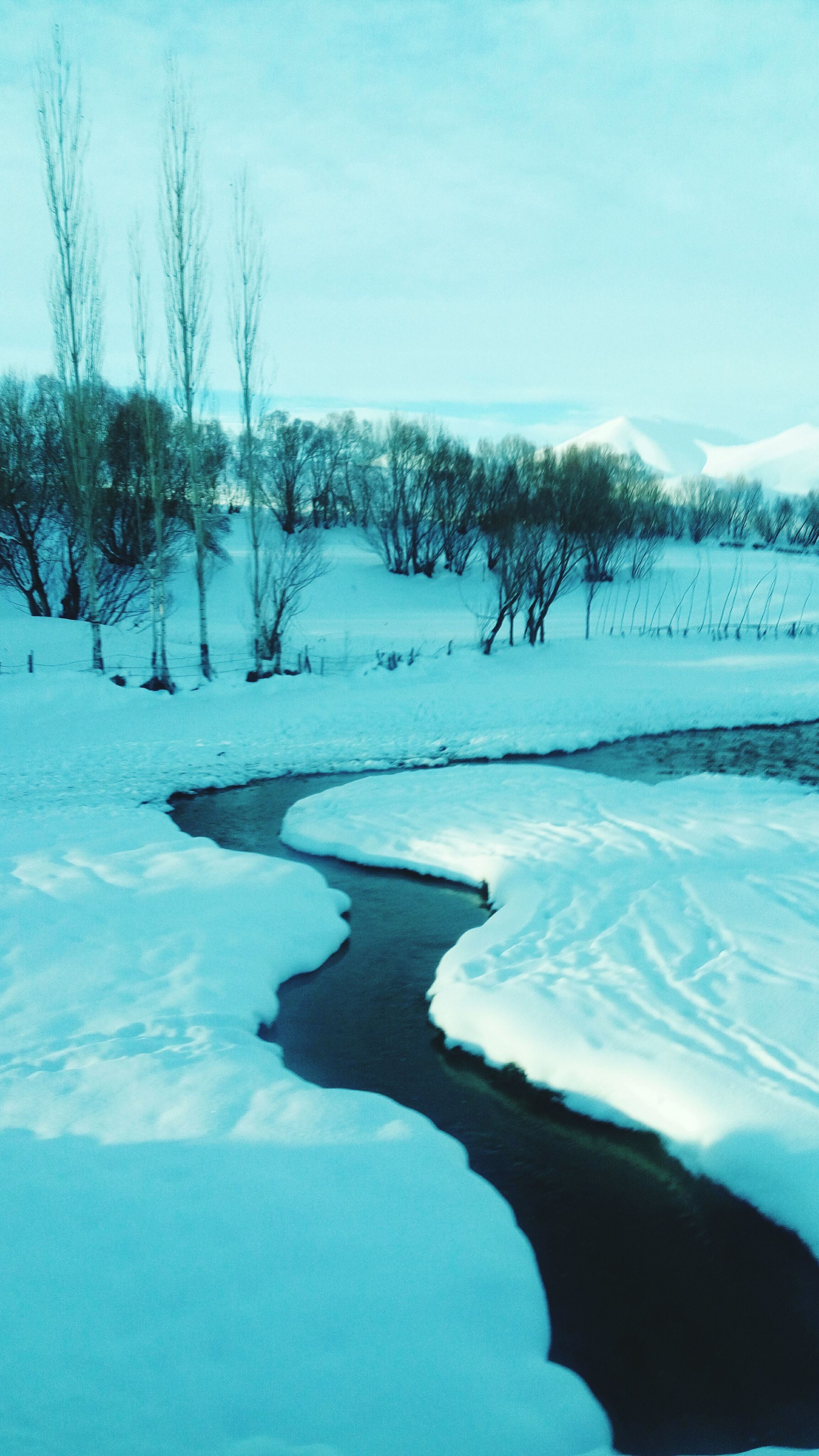 cold temperature, winter, snow, nature, beauty in nature, tranquility, tree, frozen, tranquil scene, scenics, bare tree, sky, day, outdoors, no people, ice, clear sky, landscape, frozen lake