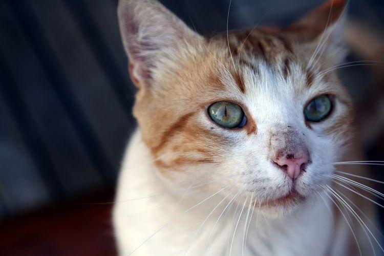 EyeEm Selects Domestic Cat Pets Animal Cute Portrait Animal Eye