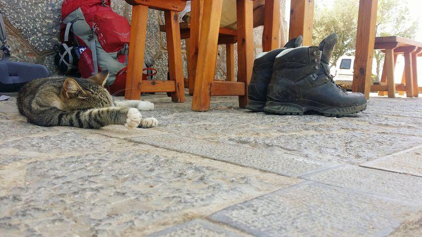 Mallorca Gr221 Hiking Portdesóller Refugi De Muleta Ichbindannmalweg Travel Photography Travel Traveling