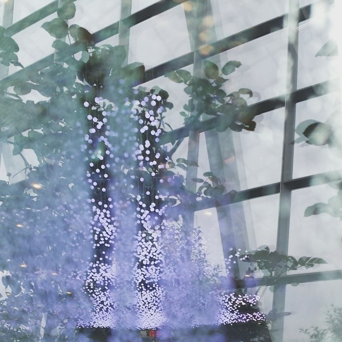 see through four elements : water, lights, plants, structure Jheowphotograph Courtesyofjheow