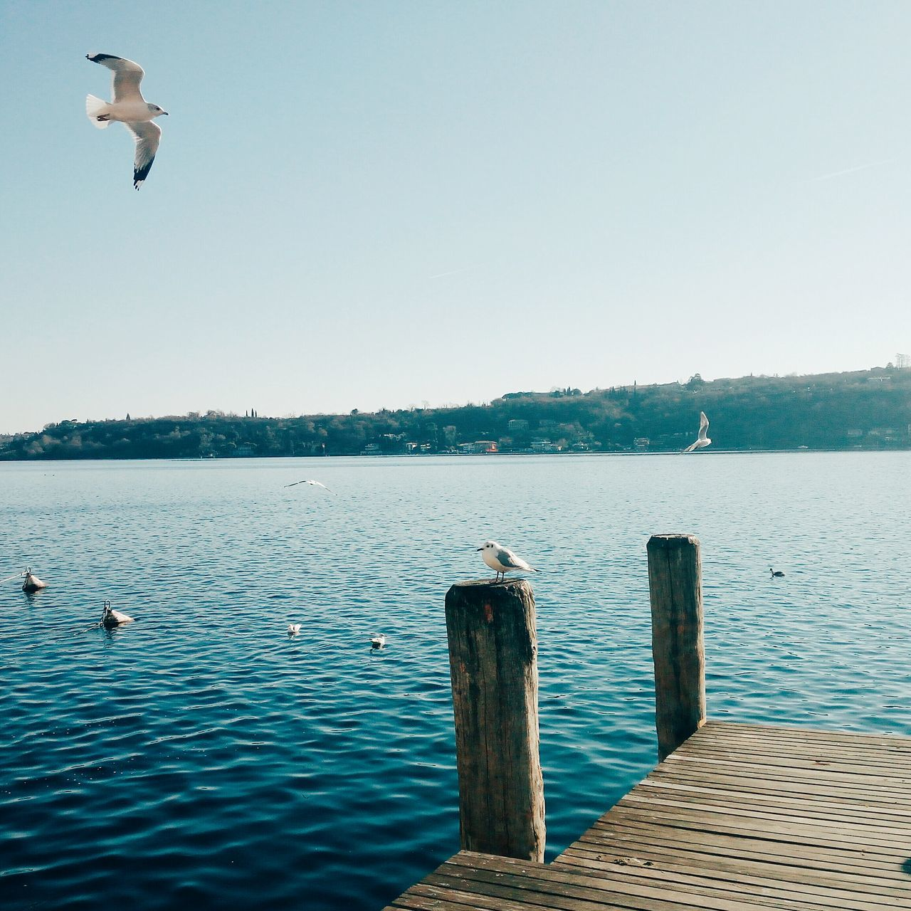 Water Bird Sea One Animal Animal Wildlife Animals In The Wild Beauty In Nature Animal Themes Outdoors Nature Day Sky Perching No People Lake Lake View