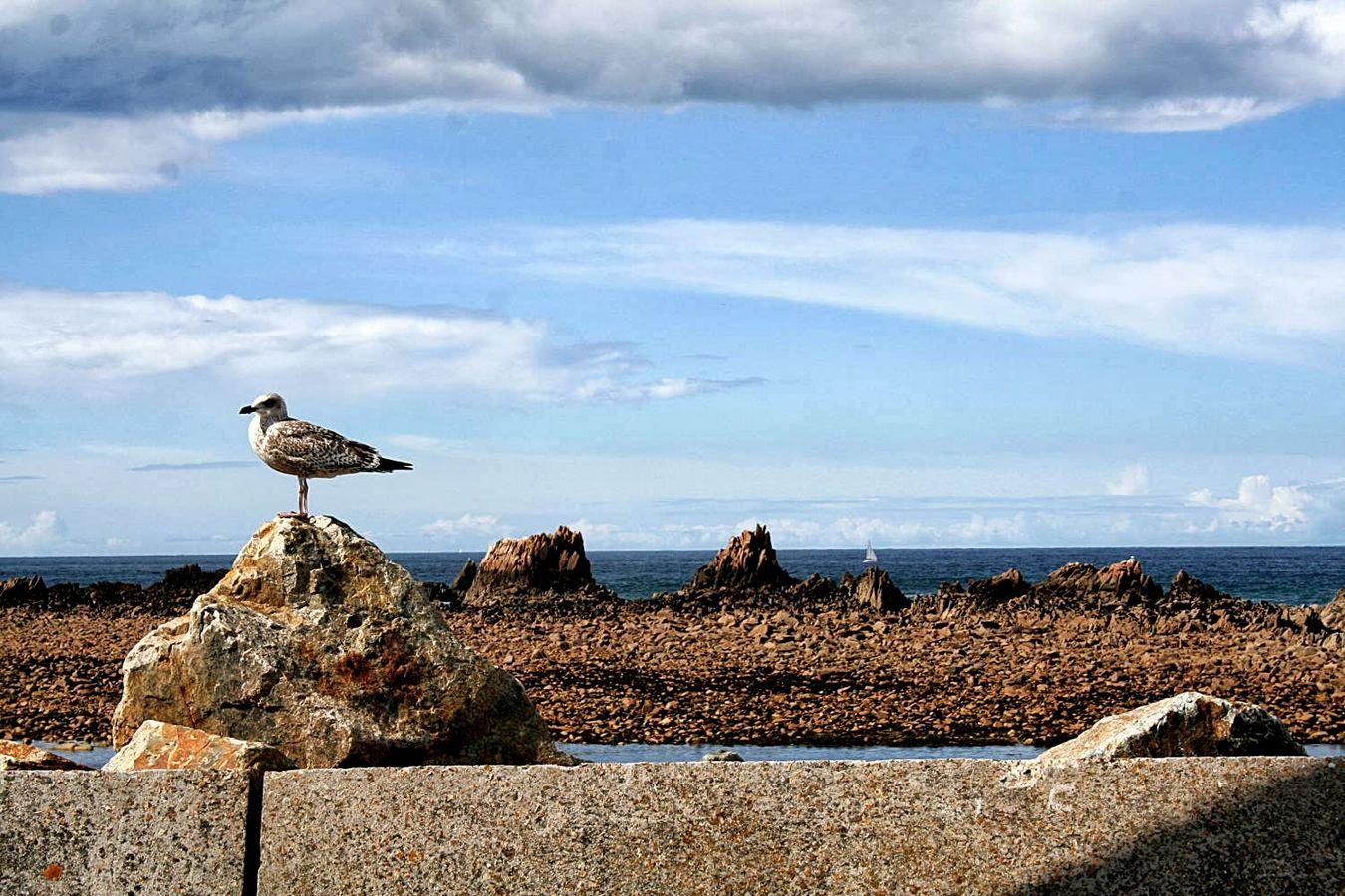 Seefaces Bird Bretagne