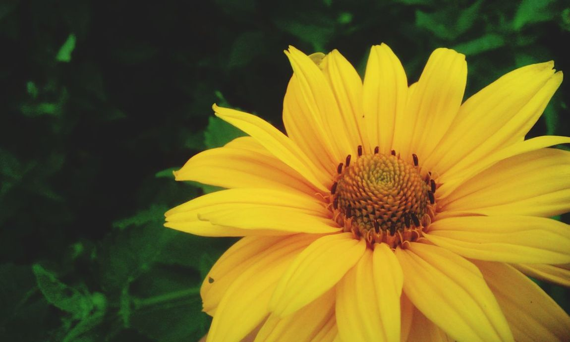 Yellow Bloom Yellow Flower Photography Taking Photos In Garden Flower Collection Summer Flowers Showcase July