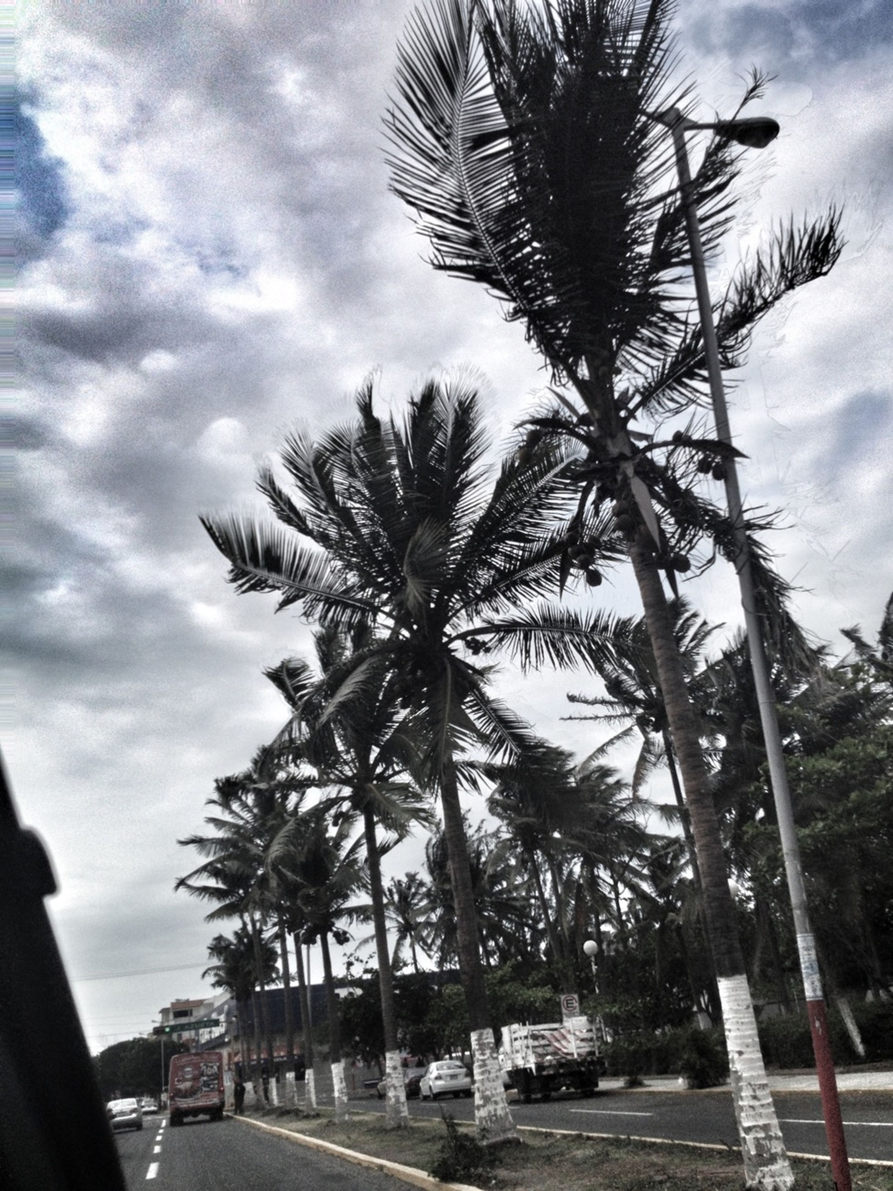 palm tree, tree, sky, cloud - sky, tree trunk, cloud, growth, cloudy, low angle view, nature, tranquility, scenics, beauty in nature, road, coconut palm tree, tranquil scene, branch, outdoors, sunlight, transportation