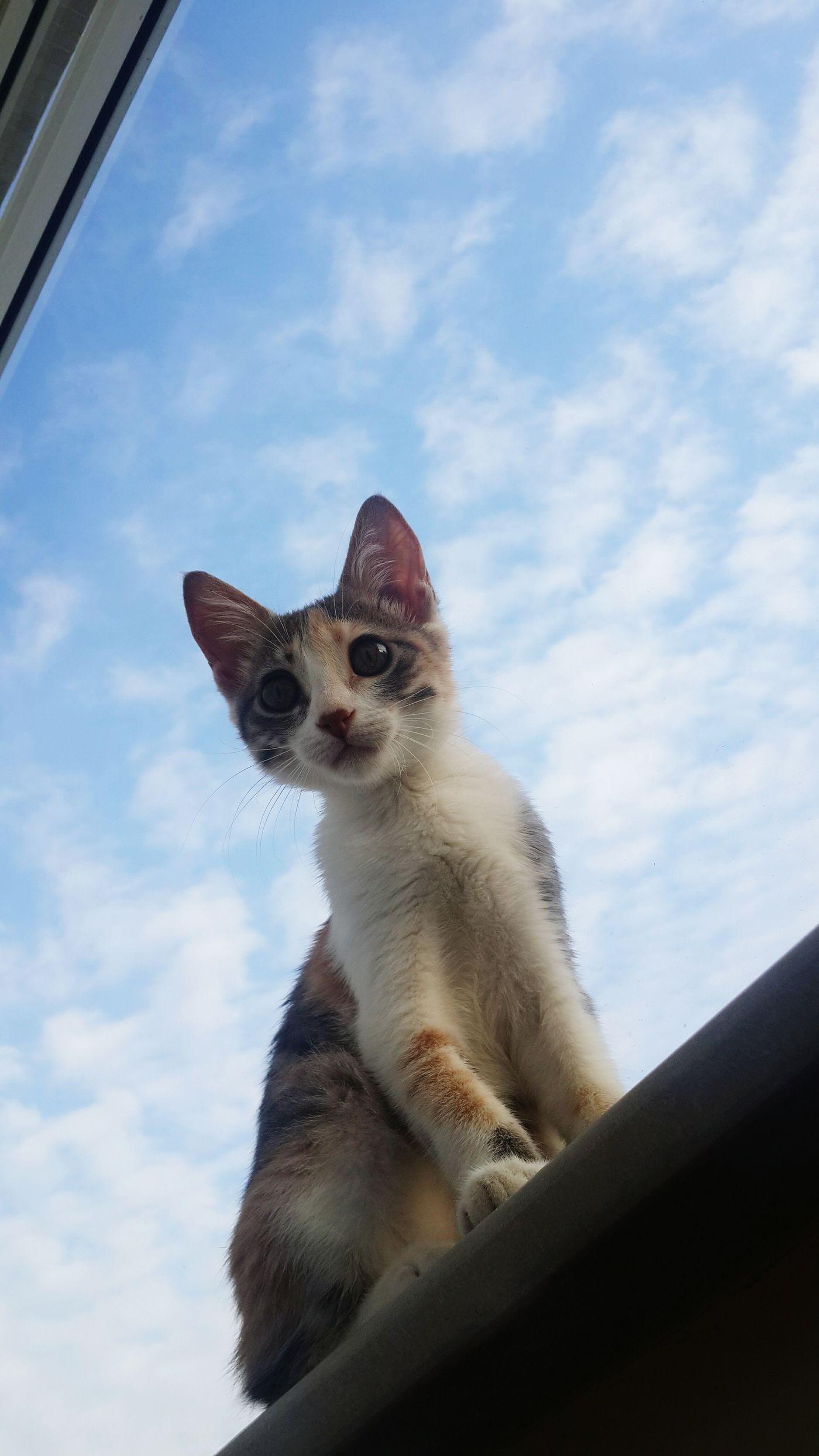 Hi! Cat Clouds Catisfly Love 😍