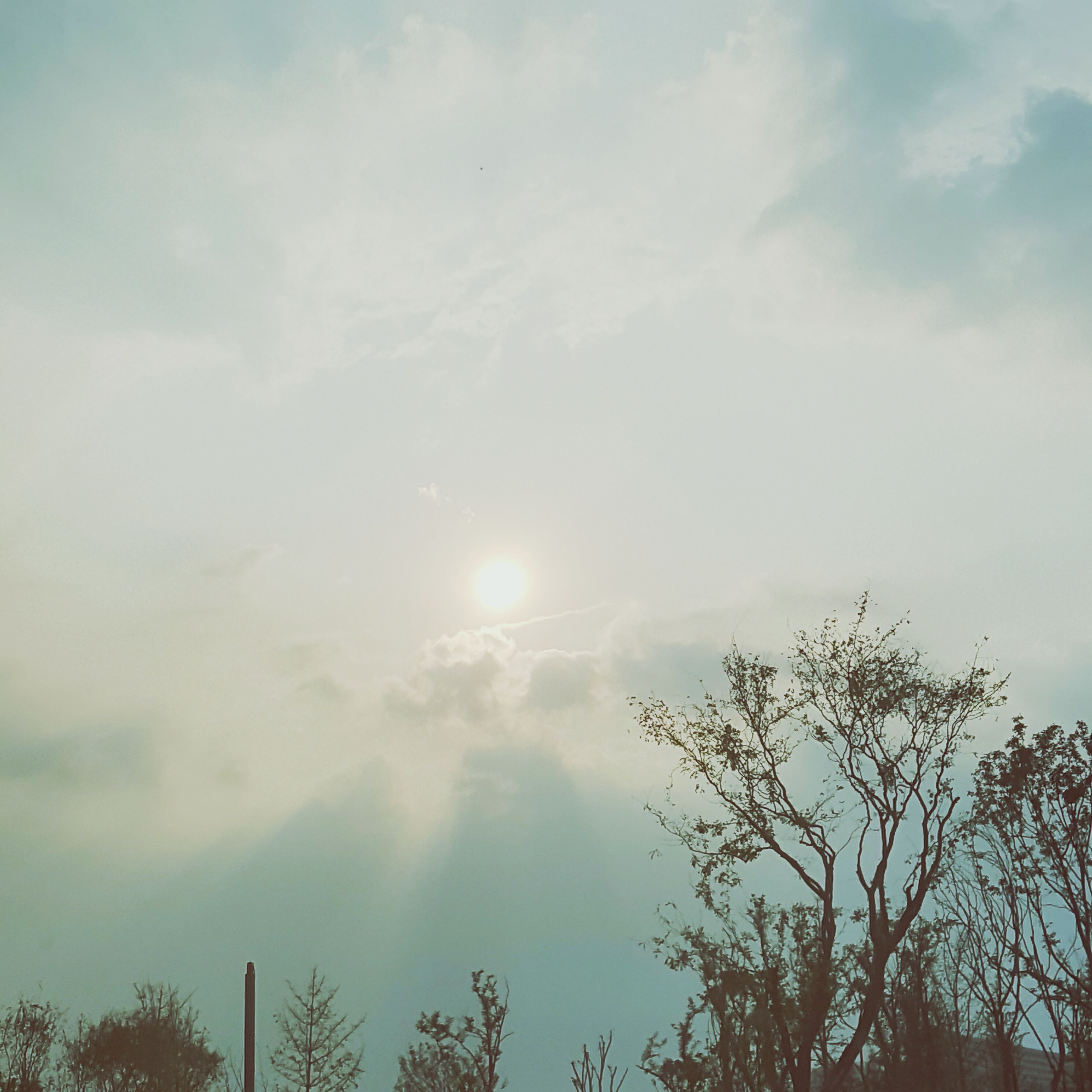 tree, sun, sky, low angle view, tranquil scene, cloud - sky, scenics, beauty in nature, tranquility, nature, cloud, growth, high section, branch, day, outdoors, lens flare, cloudy, cloudscape, outline, bright, no people, treetop, majestic, non-urban scene