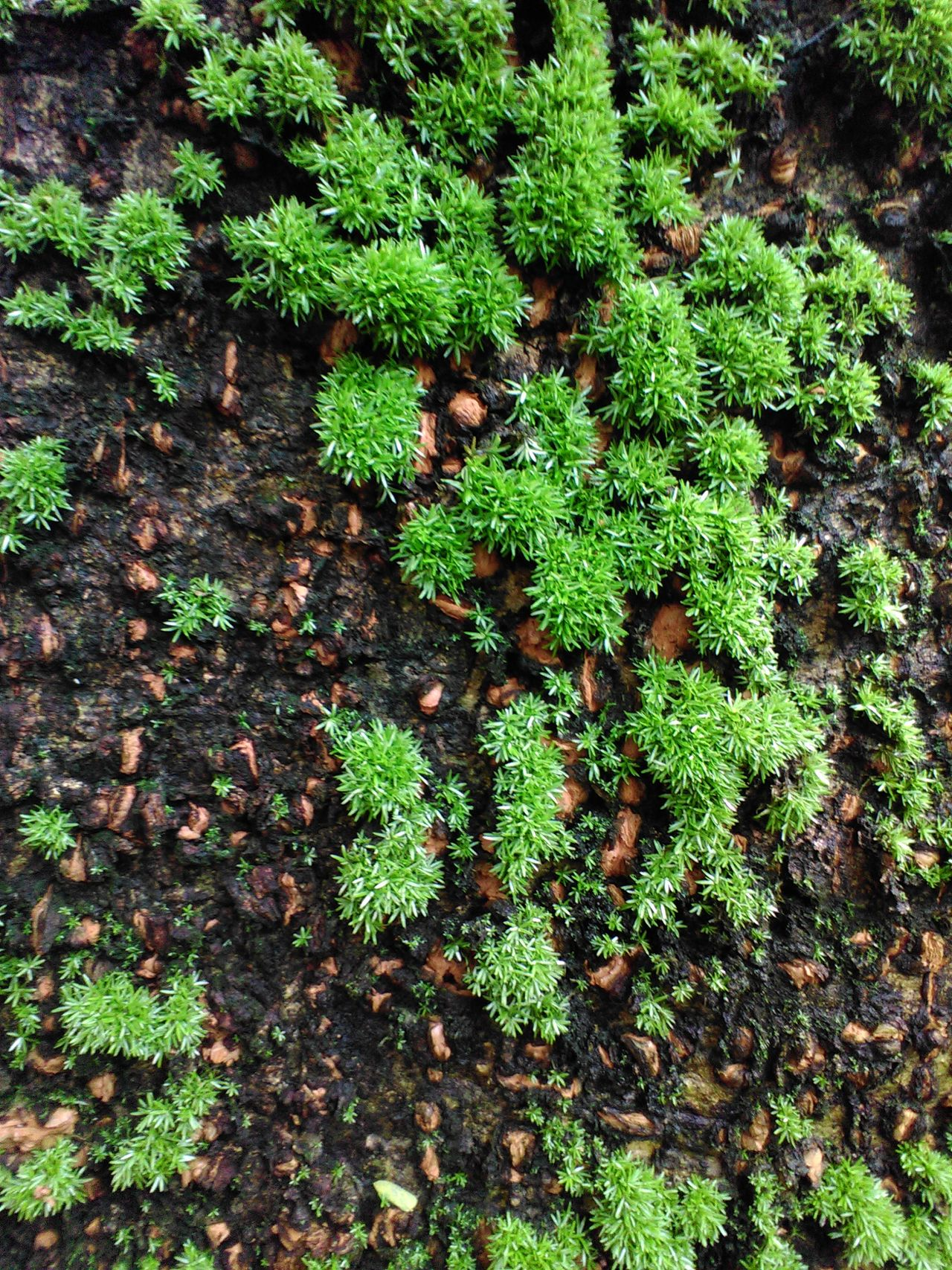 Moss tree Mossporn Natural Beauty Nature Photography Natural Green  Moss & Lichen