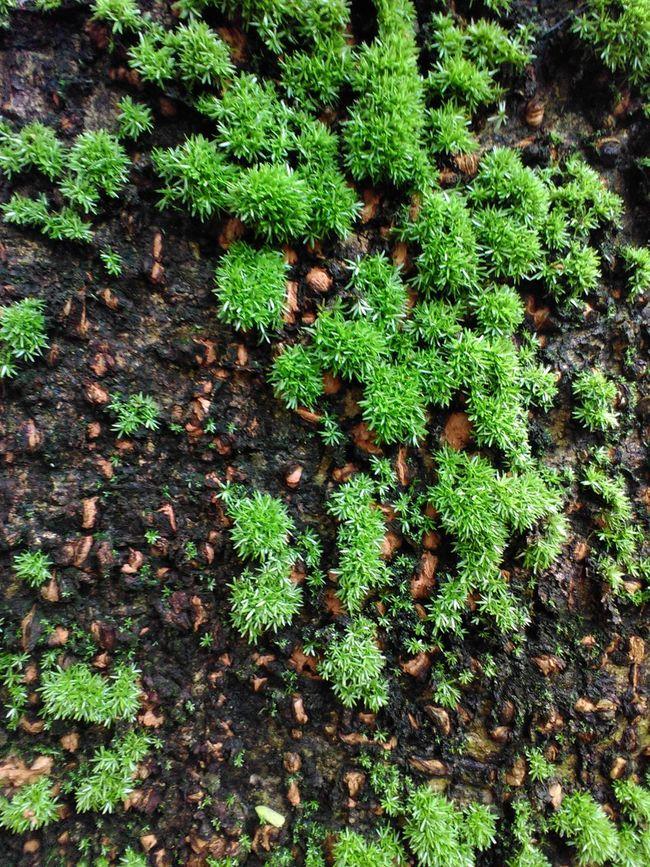 Moss tree Mossporn Natural Beauty Nature Photography Natural Green  Moss & Lichen
