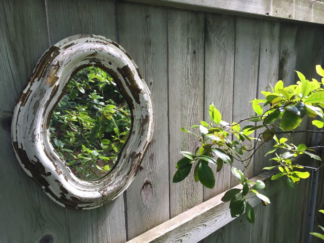 Secret Garden Garden Photography Garden Plants Reflection Garden Reflection plant vanity Check This Out