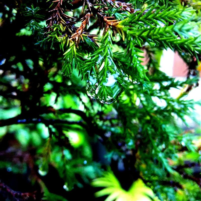 Nature Urban Nature Macro Macro Photography Macro Nature After Rain INDONESIA Yogyakarta Jogja