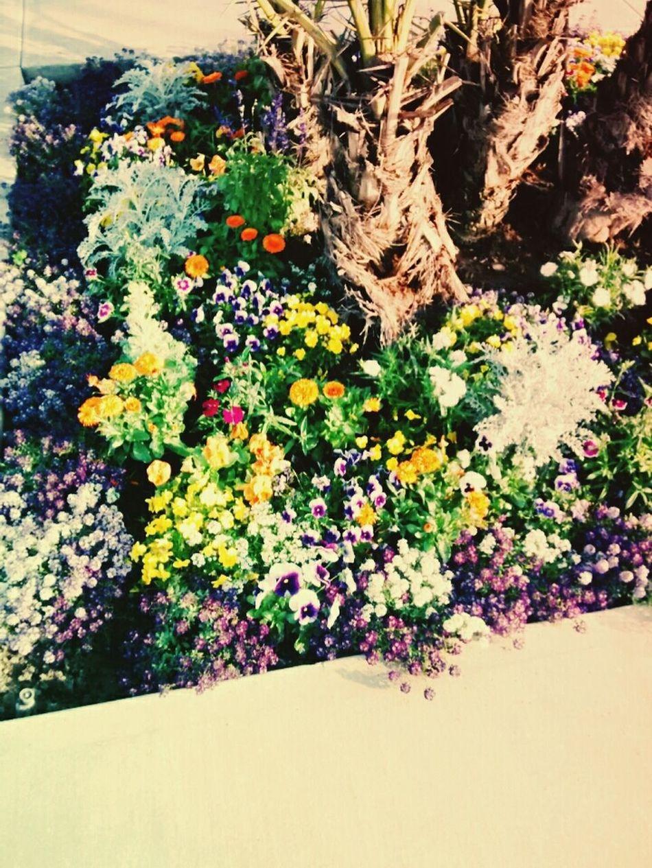 la naturaleza es lo que nos da vida !! First Eyeem Photo