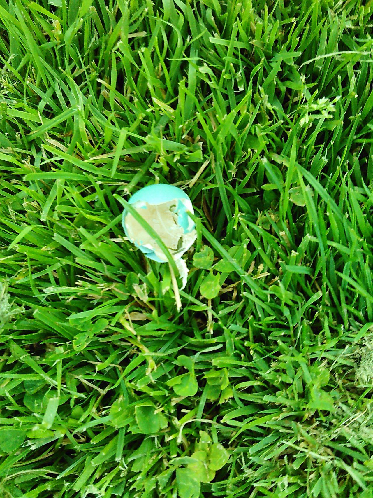 Birdsegg Blueegg Nature Real Natural Animals Babybird