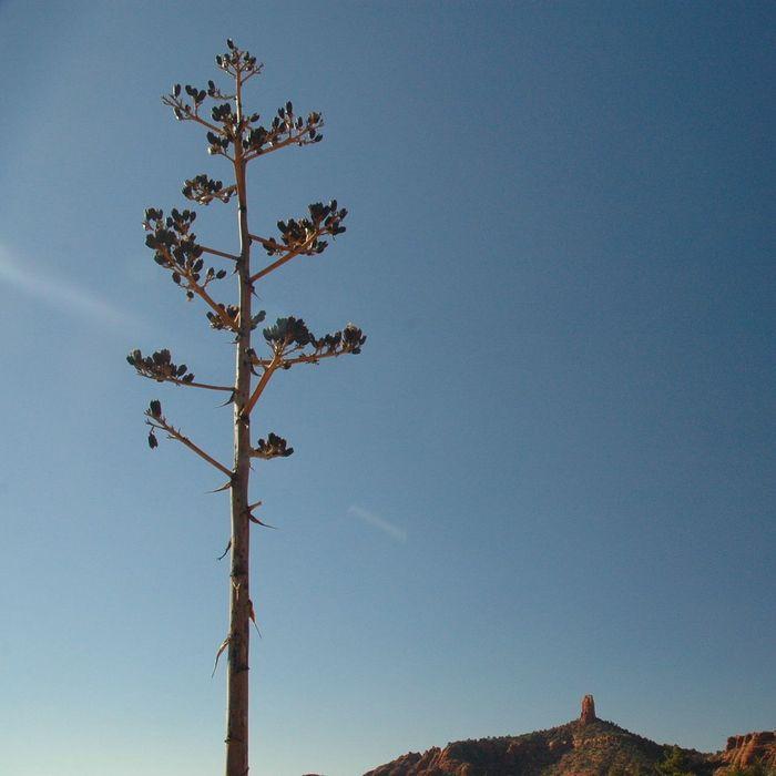 Desert Stalk. Tree Desert Landscape Sky Minimalism Sedona Taking Photos Showcase: January Eye4photography  Walking Around