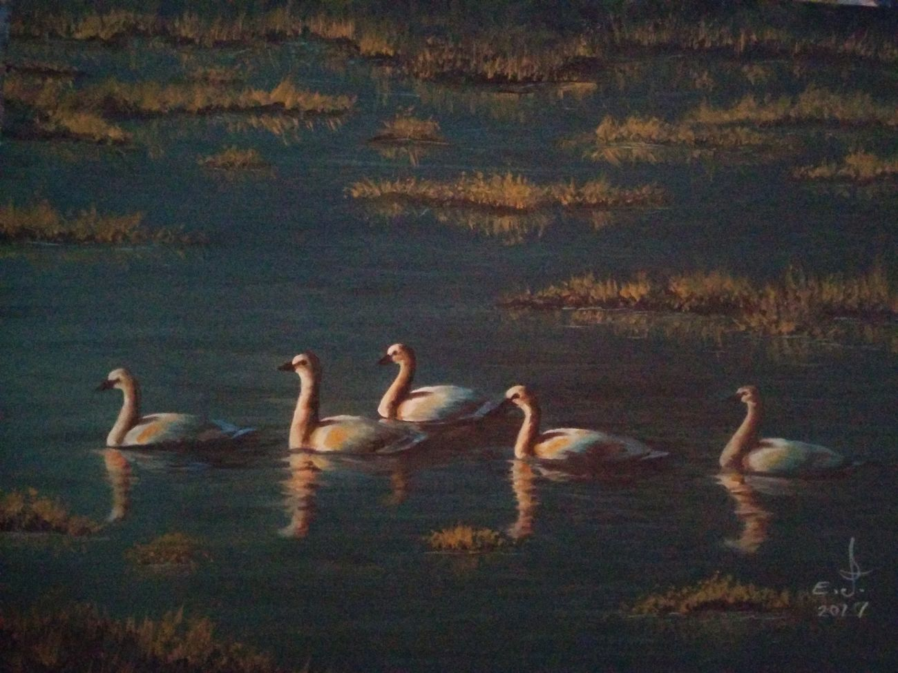 "Tundra Swans ,another magnificent precious treasure and one of the most beautiful birds ever and a true beauty ,enjoy , respect and treasure them.oil on canvas 14""_20"". Animals In The Wild Bird Animal Themes Wildlife & Nature Swan My Art Collection Fine Art Original Art ArtWork Tranquillity Oil Painting Fredom Beauty Nature My Animal Collection Blue Water Blue Sky Scenics Beauty In Nature Drawing Love♥ My Best Friends ❤ Art, Drawing, Creativity Art with my great friends"