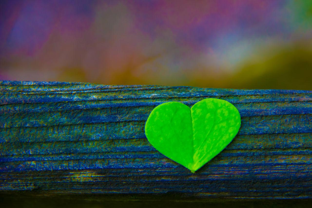 Close-Up Of Heart Shaped Leaf On Log