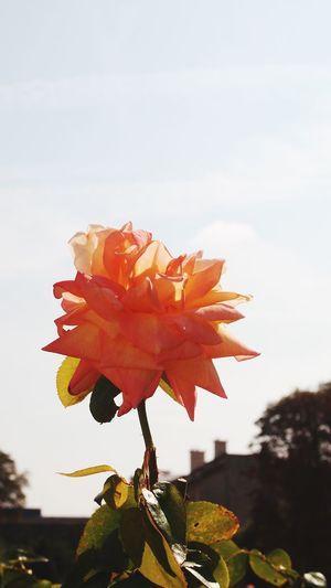 Oh Love  Nature Last Summer Blossom Hello World oh love