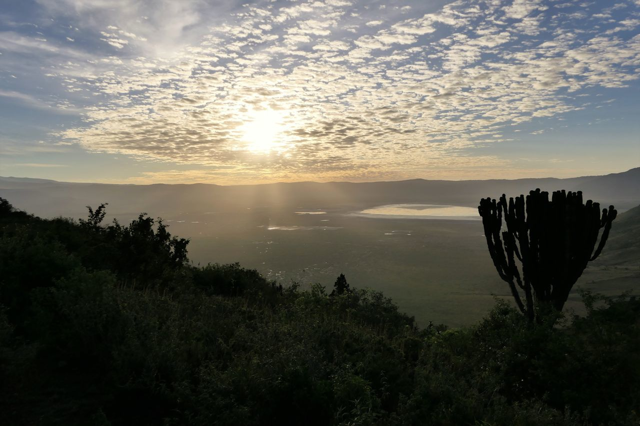 Serengeti Beauty In Nature Cloud - Sky Day Landscape Nature Ngorongoro Crater No People Outdoors Serengeti National Park Sky Sunset Tanzania Tree
