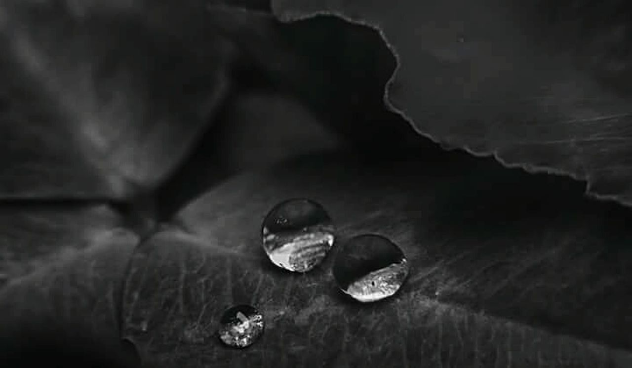 The OO Mission Drop Drops Drop Collection Drops Of Water Drops Of Rain Rain After The Rain After Rain Pioggia Gocce D'acqua Gocce Di Pioggia Natura Nature Nature Photography Macro Macro Photography Black And White Black And White Photography Bnw Bianco E Nero Two Three Detail Details