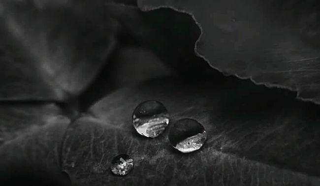 The OO Mission Drop Drops Drop Collection Drops Of Water Drops Of Rain Rain After The Rain After Rain Pioggia Gocce D'acqua Gocce Di Pioggia Natura Nature Nature Photography Macro Macro Photography Black And White Black And White Photography Bnw Bianco E Nero Two Three Detail Details