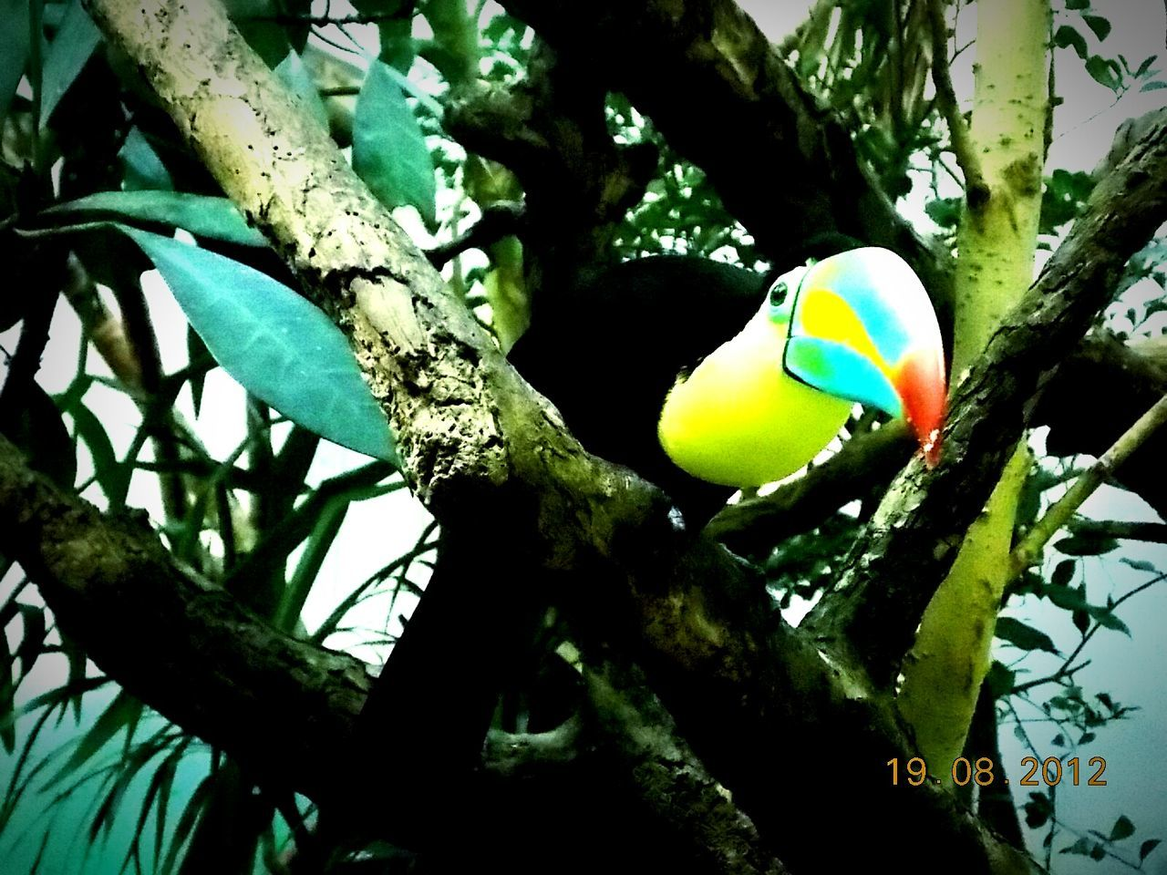 no people, animals in the wild, tree, close-up, one animal, animal themes, bird, day, outdoors, branch, nature, beauty in nature