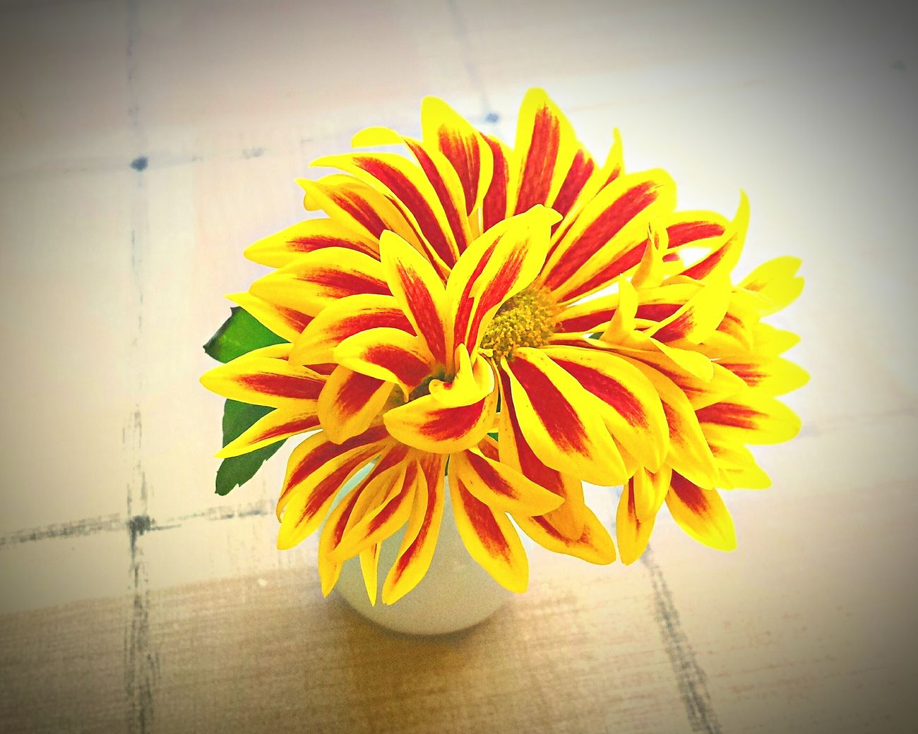 sunshine flowers p hoto Enjoy Flowers Home Sweet Home Photo Deco Live My Style Decoration Light And Shadow Harmonie Harmony Focus On Foreground Scenics Everyday Lives Creativity Kreatives No People Harmony With Nature Naturelovers Plant Style